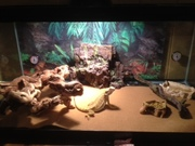 Bearded Dragon and Full Set-Up